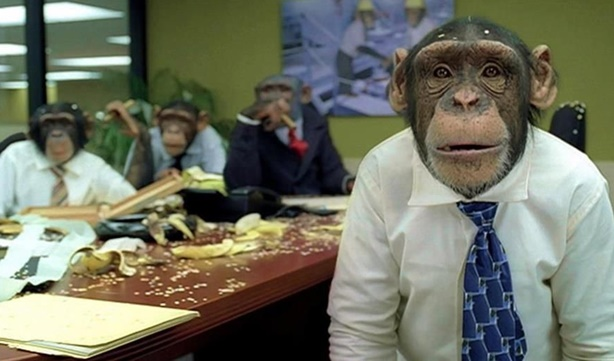 Chimps-board-meeting