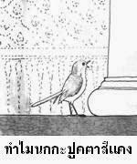 นิทาน เรื่อง เพราะเหตุใดนกกะปูดจึงตาแดง