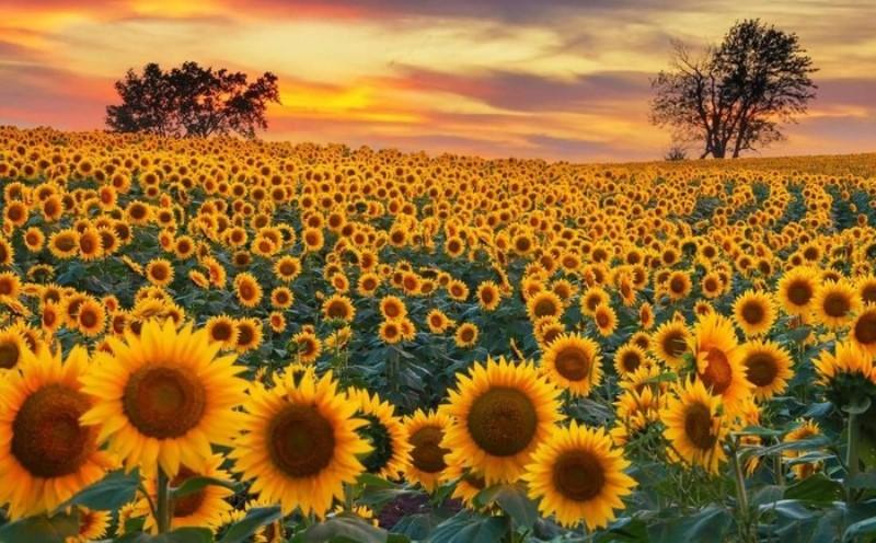 Jenis Bunga yang Dapat Dikonsumsi dan Bermanfaat untuk Organ Tubuh