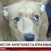 Απίστευτη κτηνωδία: Πέταξε σκύλο από τον τρίτο όροφο πολυκατοικίας! (ΠΡΟΣΟΧΗ - Σκληρές εικόνες)