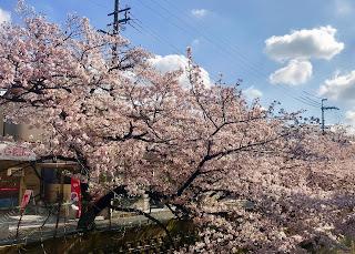 2019 Cherry Blossom Offerings...