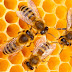 Bal ve Arı Ürünleri İle İlgili Akıllarda Soru İşareti Kalmasın