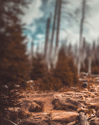 Perfect Nature Blur Background Free Stock Image