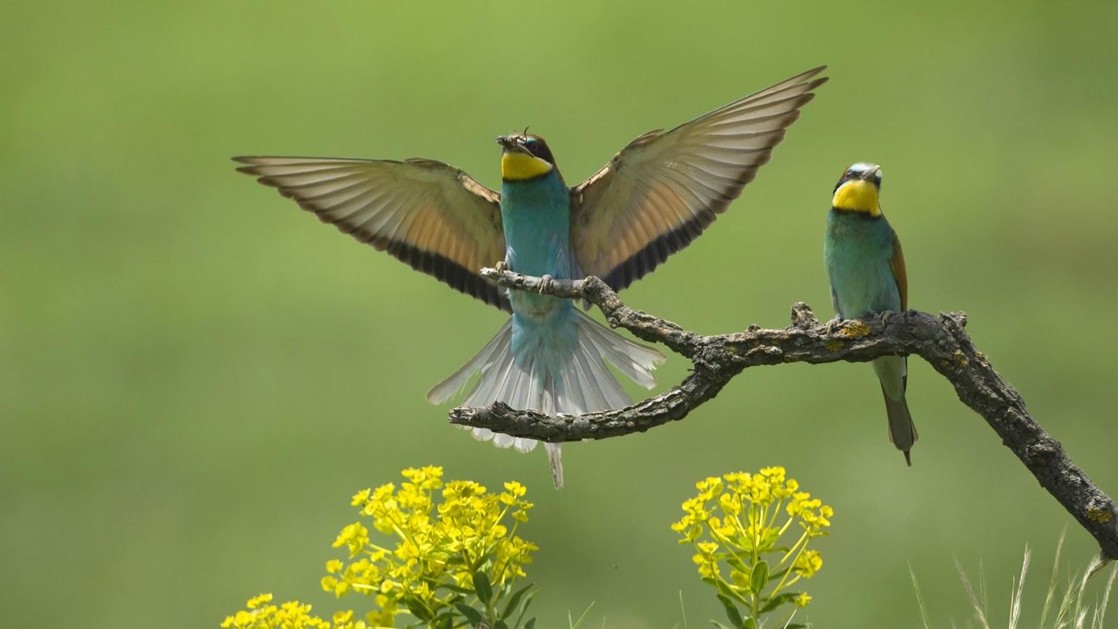 Bing Animated Wallpaper Vogels Achtergronden Hd Wallpapers