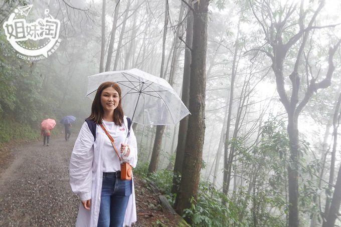 高雄旅遊,藤枝森林遊樂區,親子旅遊,藤枝開放,藤枝住宿
