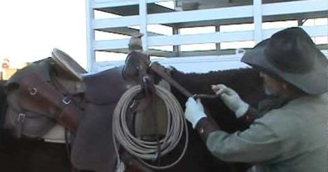 Functional Horsemanship Breast Collar Fit Question