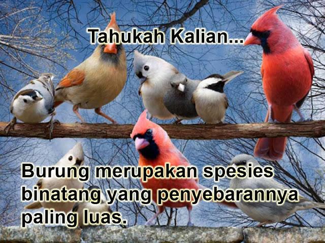 Burung merupakan spesies hewan yang penyebarannya paling luas di dunia Burung merupakan spesies hewan yang penyebarannya paling luas di dunia