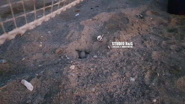 Ναύπλιο: Γεννητούρια στην παραλία της Καραθώνας - Σκαρίσανε τα πρώτα χελωνάκια (βίντεο)