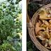 Ιωάννινα:Σεμινάρια από το Πανεπιστήμιο  για αξιοποίηση αρωματικών φυτών, μανιταριών και τρούφας