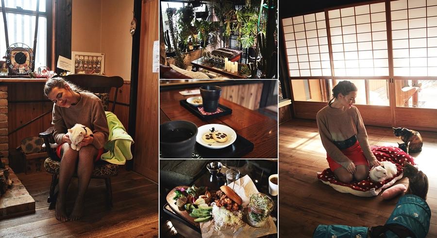 sasayama castle town cat cafe vegan
