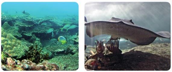 Adaptación al medio acuático