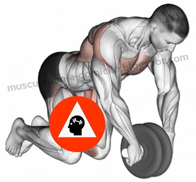 exercice musculation abdos roulette abdominale transverse
