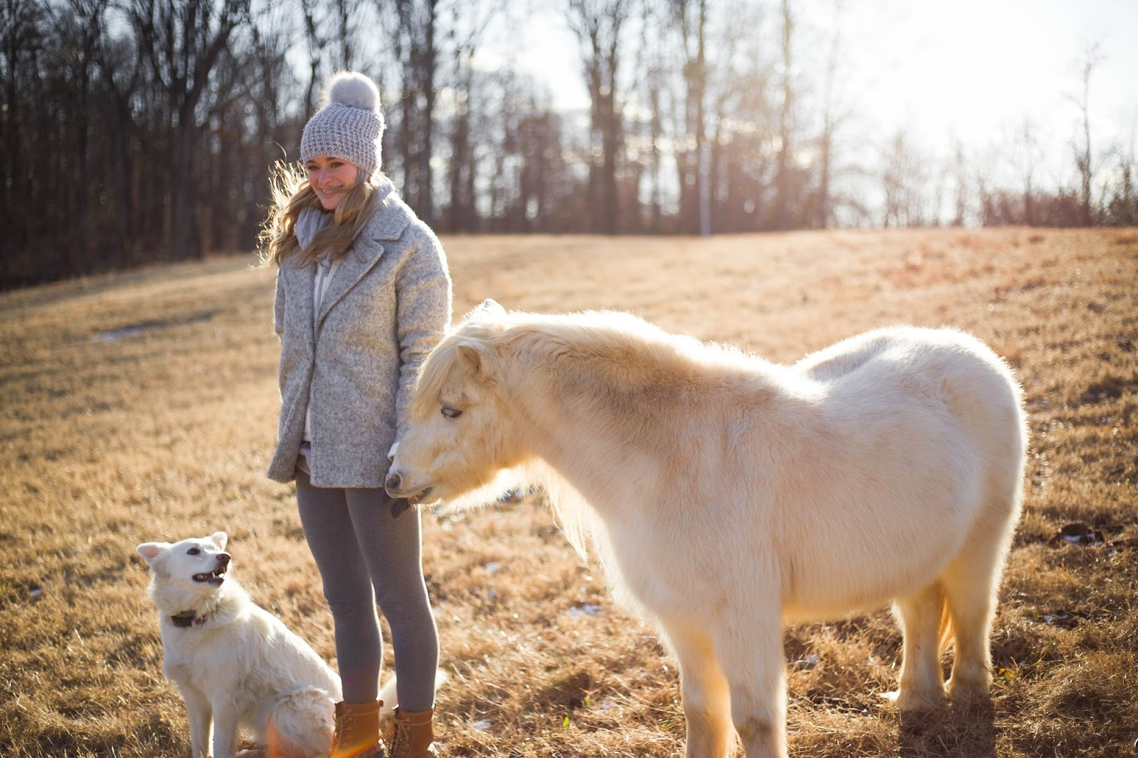 Miniature White Horse