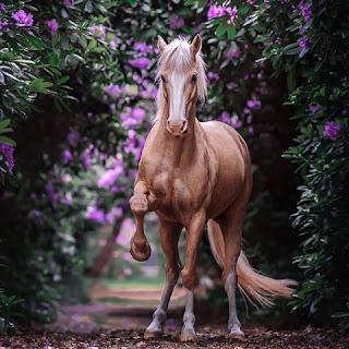 صور خيول واجمل خلفيات حصان