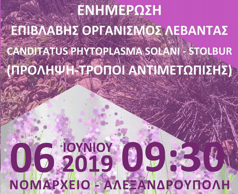 Ενημερωτική εκδήλωση για την ασθένεια Stolbur σε καλλιέργειες λεβάντας