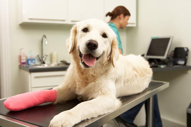 huisdieren, verzekering, mvg, verzekeringen, dekking