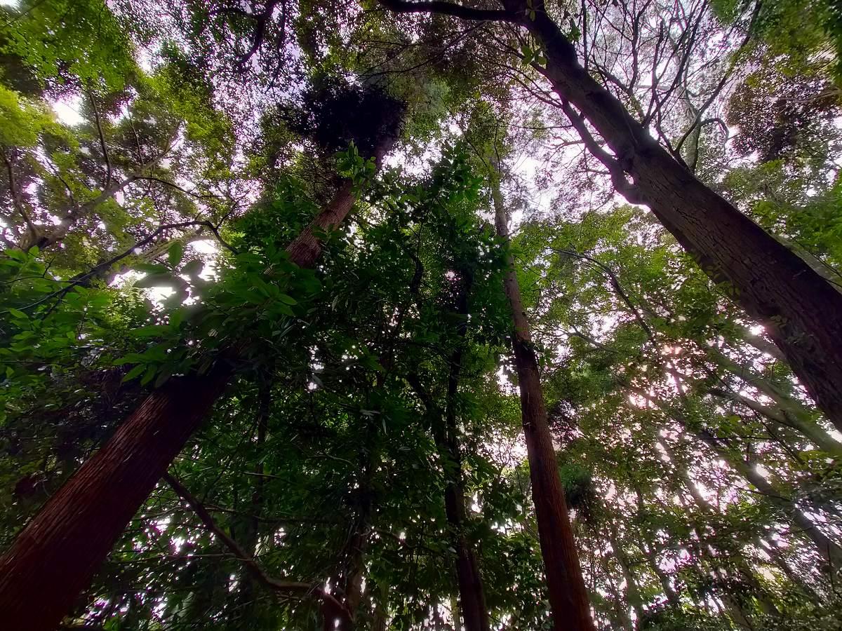 最後にもう一回空を見上げますが、木々が凄くて空が見えませんでした。