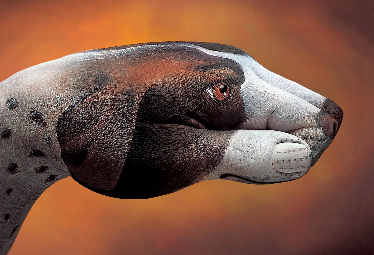 dog hand painting by Guido Daniele
