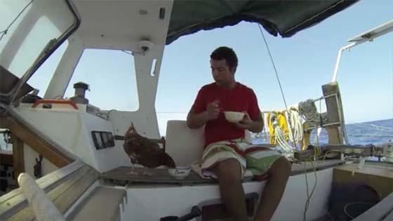 Belayar Bersama Seekor Ayam,  Lelaki Ini Dapat Perhatian Dunia