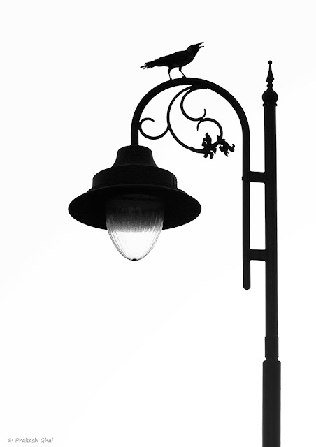 A Black and White Photo of a Black crow sitting on top of a Street Lamp on the Streets of Jaipur, India.