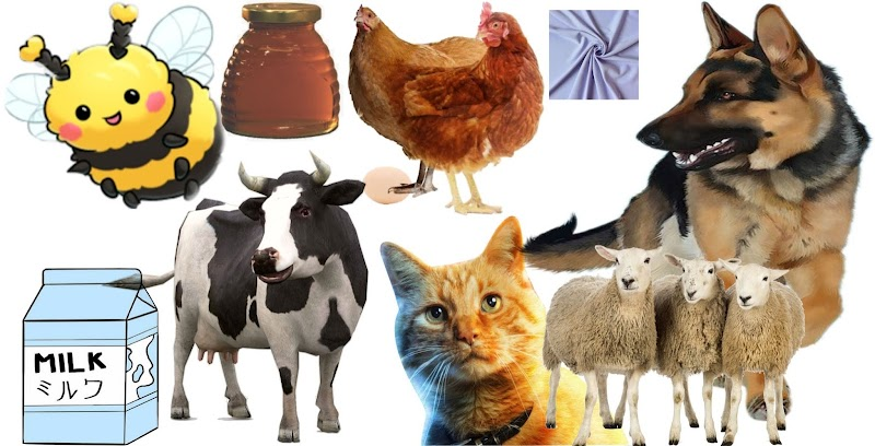 Pet animals and birds useful to us poem comprehension