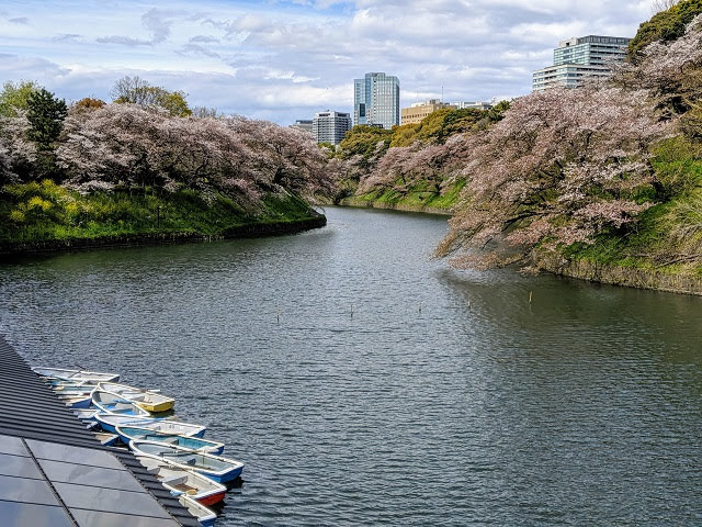 Springtime in Japan for a week: Chidorigafuchi Green Way in Tokyo