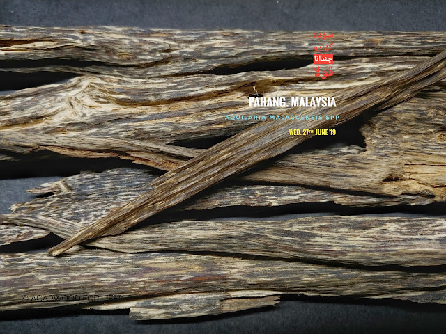 Regular quality of Agarwood from Malaysia. Suits for burn as incense.