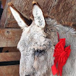 Knitting for the Donkey Sanctuary of Canada