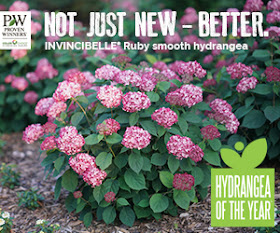 Garden Bloggers Fling Proven Winners Colorchoice Supporting