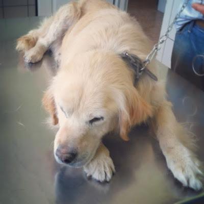 Atopijski dermatitis kod pasa i mačaka Panvet veterinarska stanica