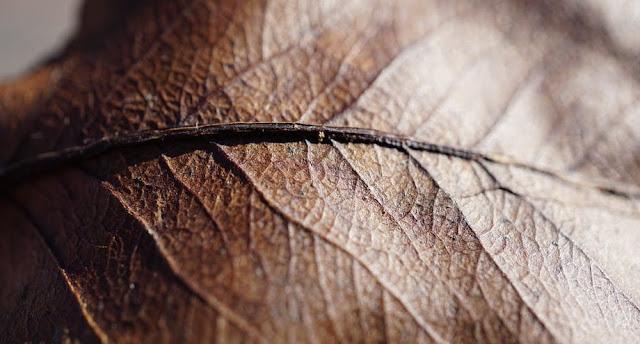 manfaat daun sirsak