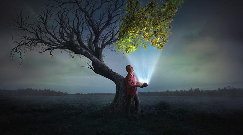 Homem com uma bíblia na mão debaixo de uma arvores com metade dos galhos secos já os galhos iluminados pela palavra floresceram verdejantes