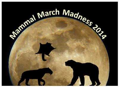 March Maddness... Mammal style! (plus my love of Walter)
