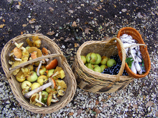 Apples and mushrooms foraged in the forest, Indre et Loire, France. Photo by Loire Valley Time Travel.