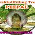 Wish Fullfilling Tree- PEEPAL