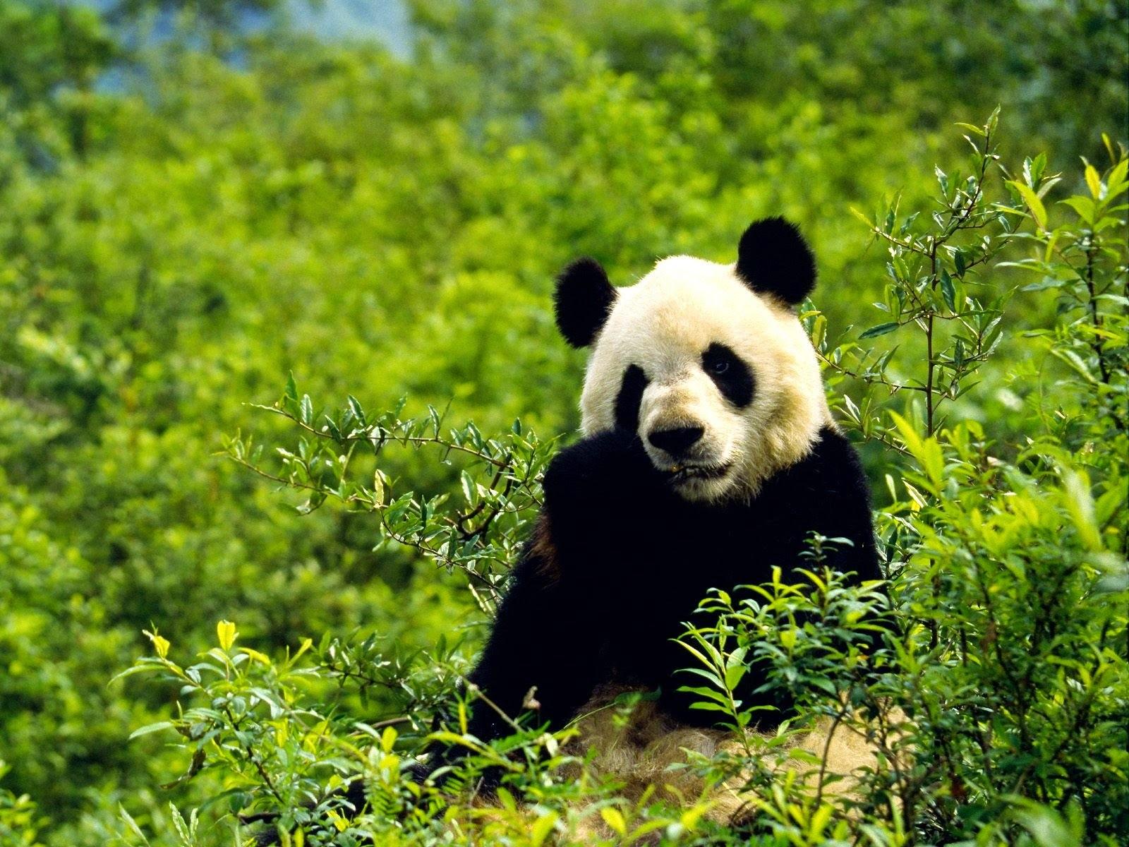 wild animal Photo, Pet Animla Photo, Pet Photo, Cute Photo, Cute animla