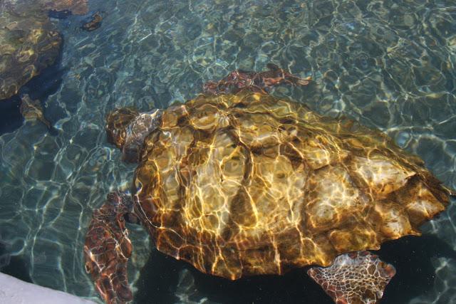 Meeresschildkröten Aufzuchtstation Fuerteventura 02
