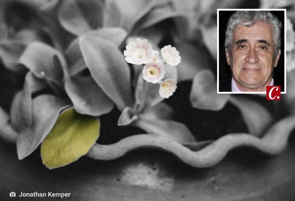 ambiente de leitura carlos romero conto luiz augusto paiva saudosismo viuvez sítio flores amizade saudades