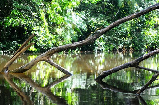natuur frans-guyana, balatarivier, amazonewoud