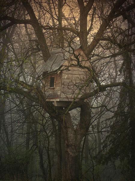 dom w koronie drzewa