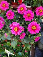 Blumenladen
