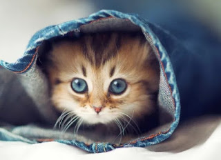 gambar anak kucing lucu - kanalmu