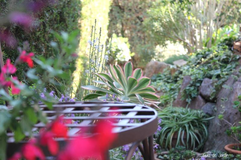 verano en mi jardín