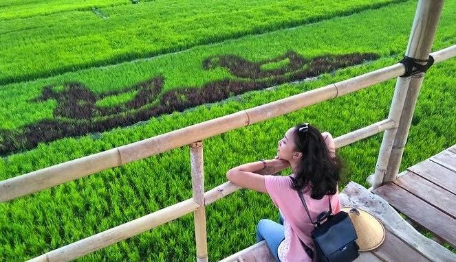Keindahan sawah kreasi yang ada di Prambanan Sleman