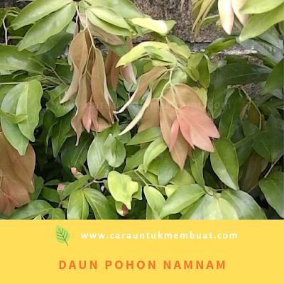 Daun Pohon Namnam