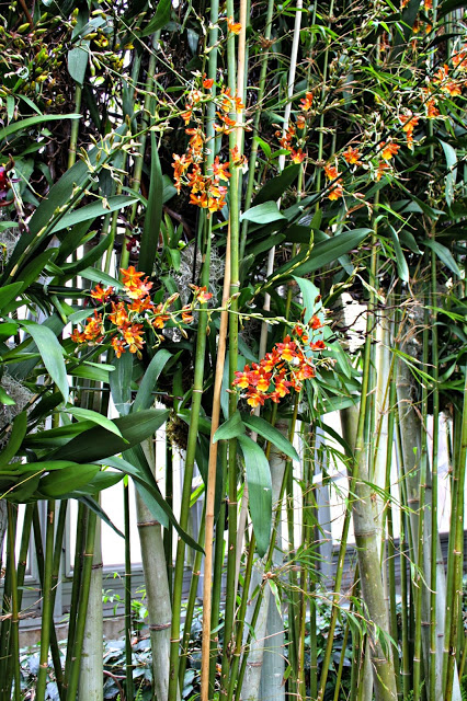 Orange orchids at The Orchid Show at Chicago Botanic Garden