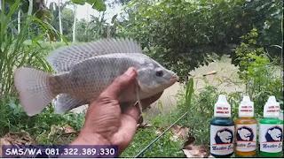Essen Ikan Nila Khusus Di Sungai
