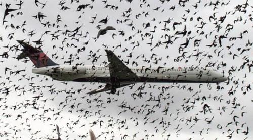 BURUNG BURUNG :  Setiap pesawat udara beresiko bertabrakan dengan sekawanan burung burung saat terbang.  Foto ANDREW CABALLERO REYNOLDS