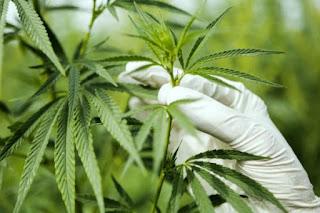 Illinois joins 10 U.S. state to legalise Marijuana