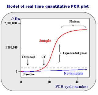 Pebedaan dan Persamaan Real-time PCR dengan PCR konvensional, Pemeriksaan COVID-19